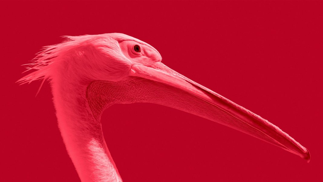 pink bird maksim sansonov