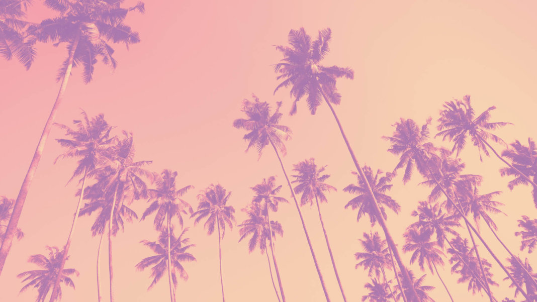 palm trees pink sky