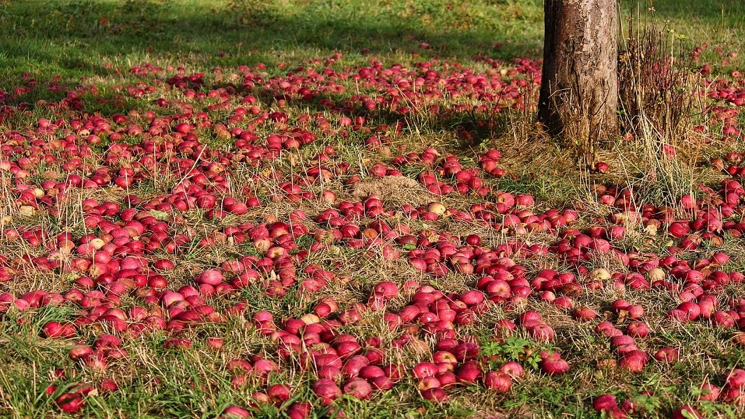 apples at base of tree food waste artificial intelligence