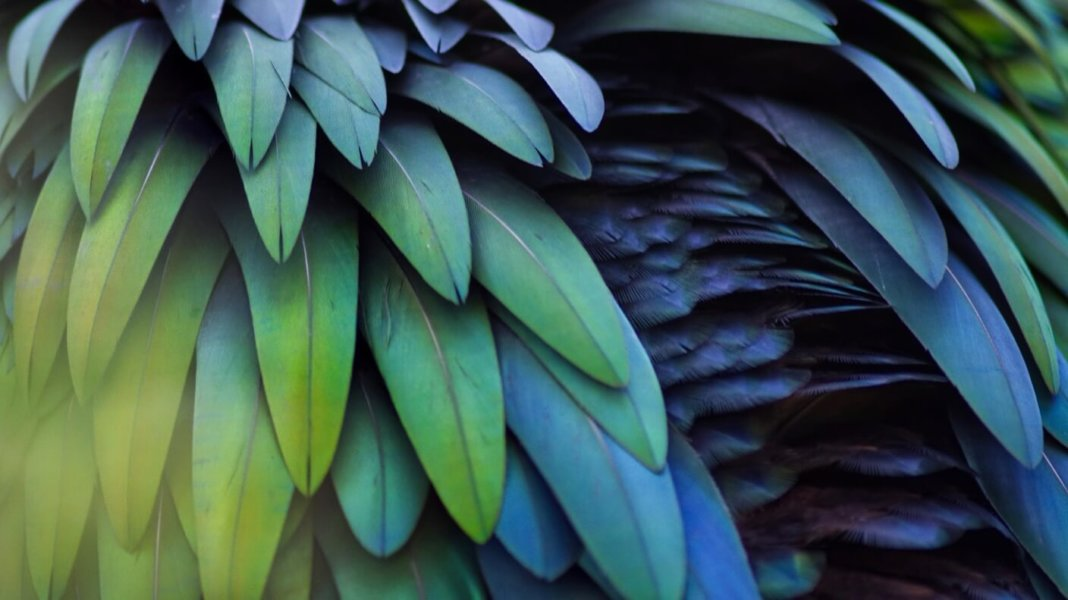 colorful feathers layered blue green
