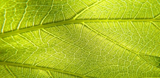 artificial photosynthesis leaf green plant