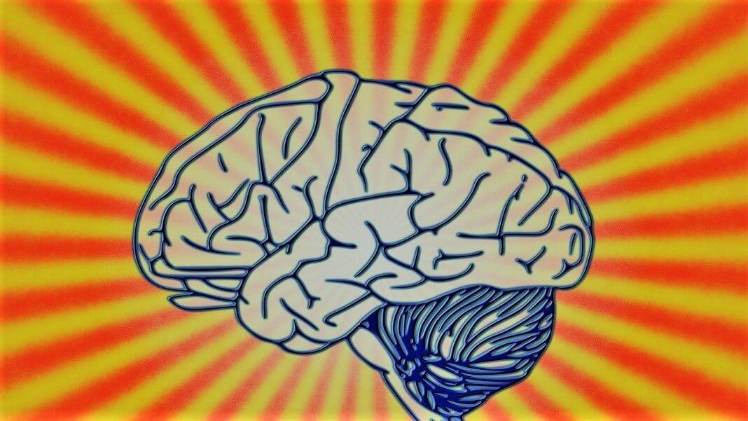 brain AI neuroscience consciousness