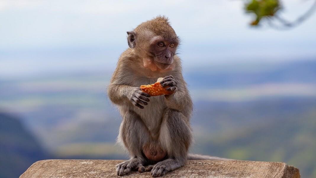 monkeys neuromodulation ultrasound