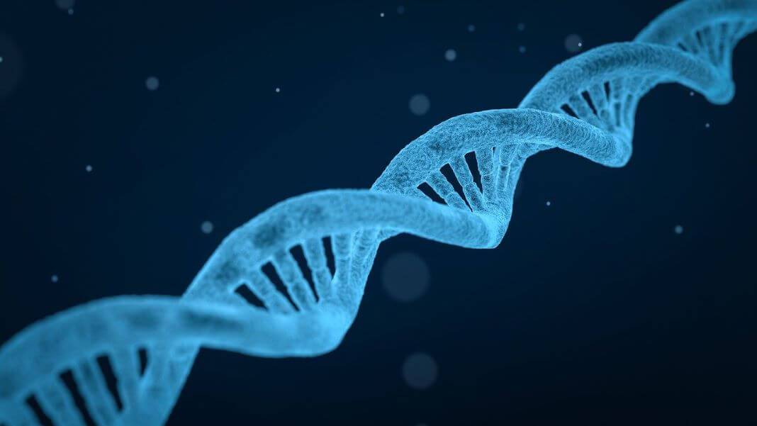 blue DNA double helix longevity genomics