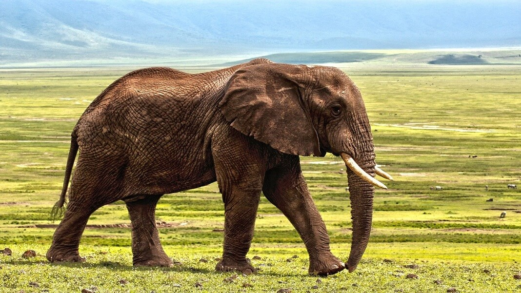 evolution future of life elephant
