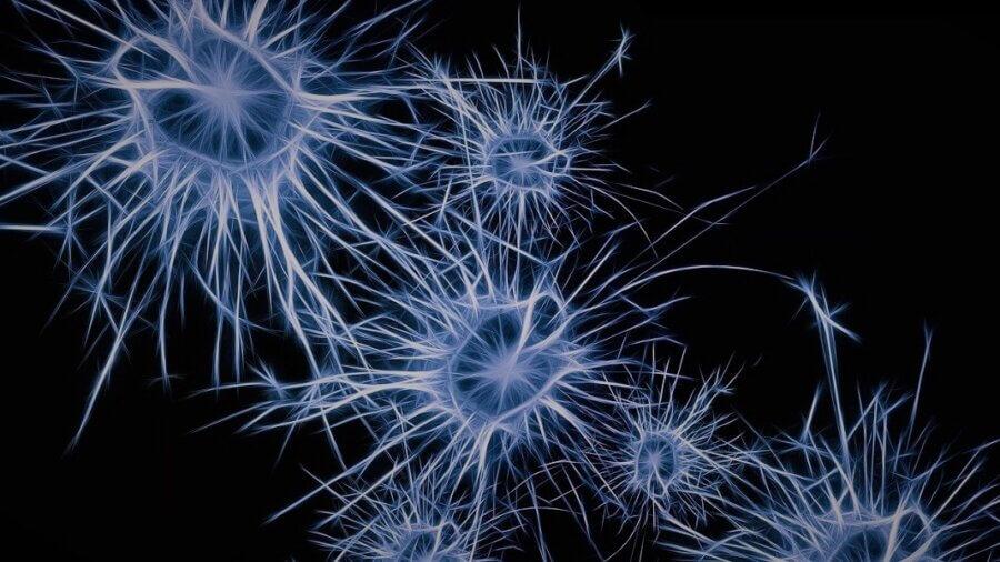 neurons brain synapses nanowire network AI