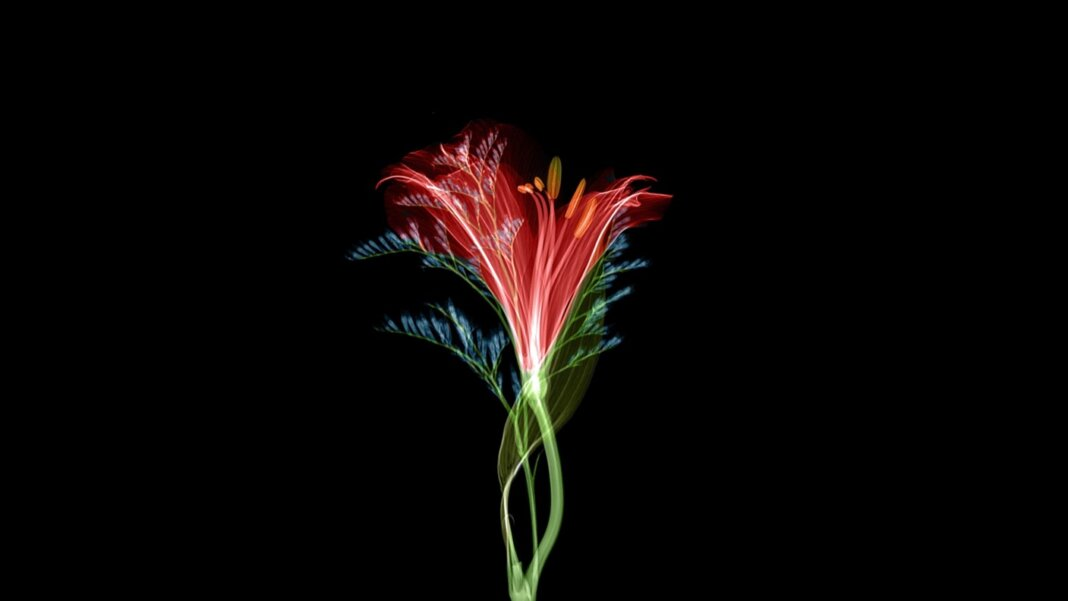 tech stories red green flower black background