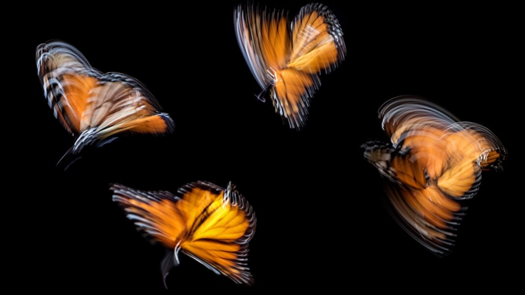 tech stories butterflies blurred motion wings black background
