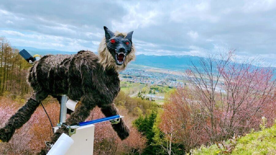 Japanese Towns Use This Robotic Wolf to Scare Off Bears, and It's Terrifying 2