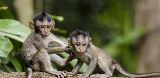 ultrasound brain-machine interface neuroscience tech monkeys
