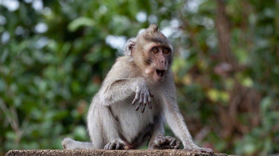 CRISPR gene therapy monkeys LDL cholesterol