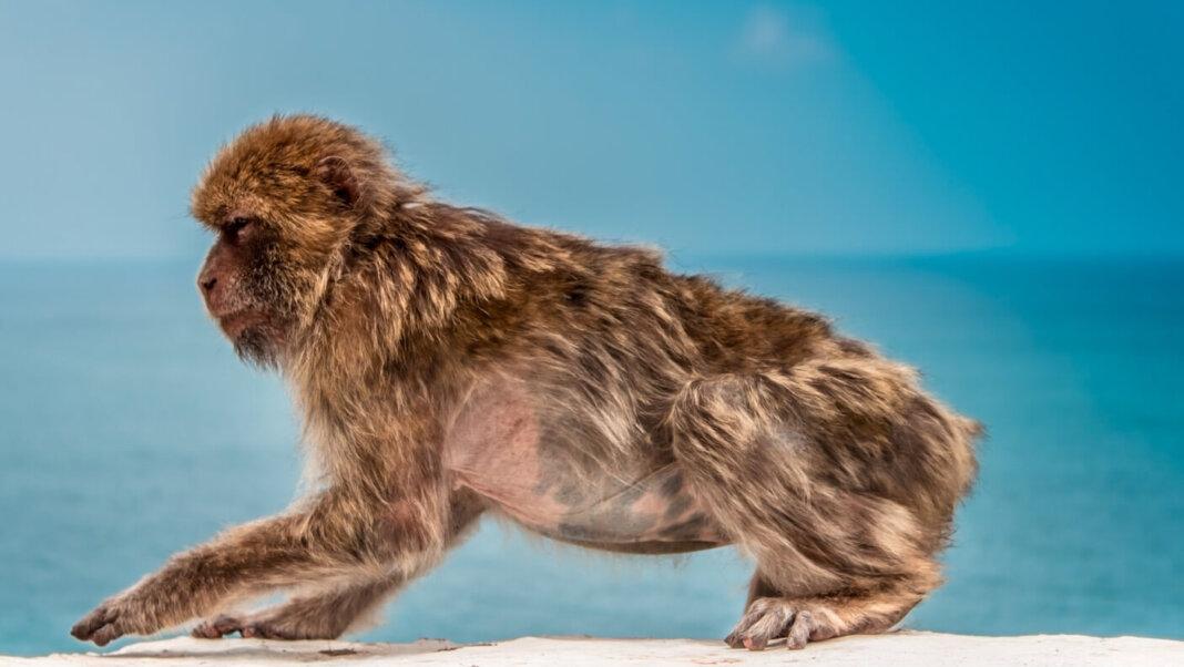human evolution monkey ocean background blue sky