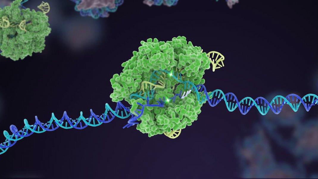 gene therapy intellias crispr cas9 genome editing dna