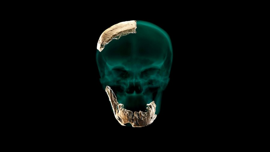 skull new human species discovered israel