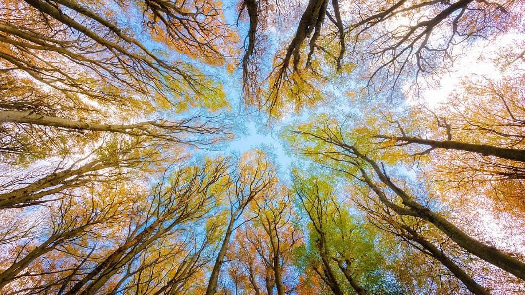 hydrogen economy renewable energy trees