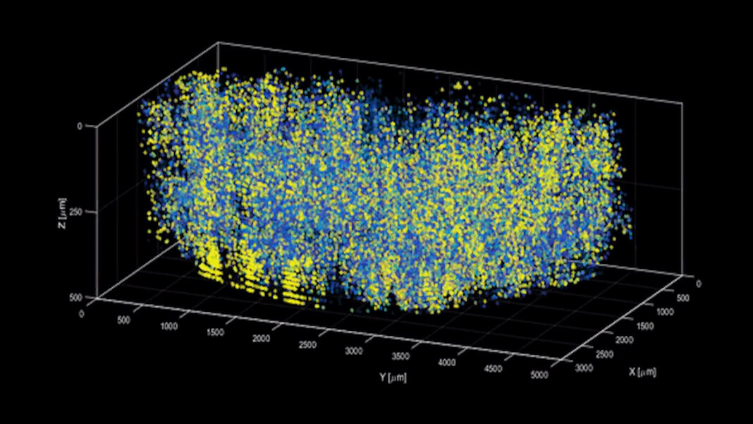 brain imaging 3D movie neurons firing in a mouse brain