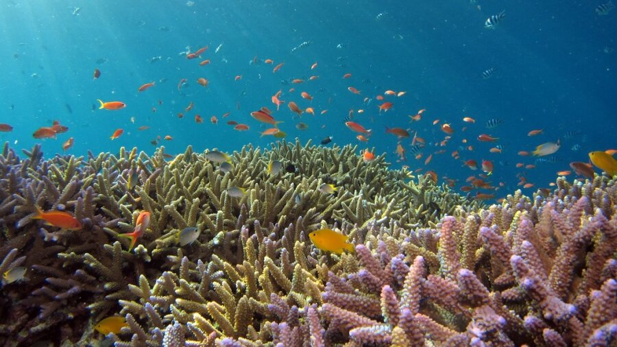 coral reef ocean sea climate change Ccell hybrid reef fish